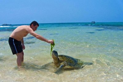 turtle-watch-rekawa-beach